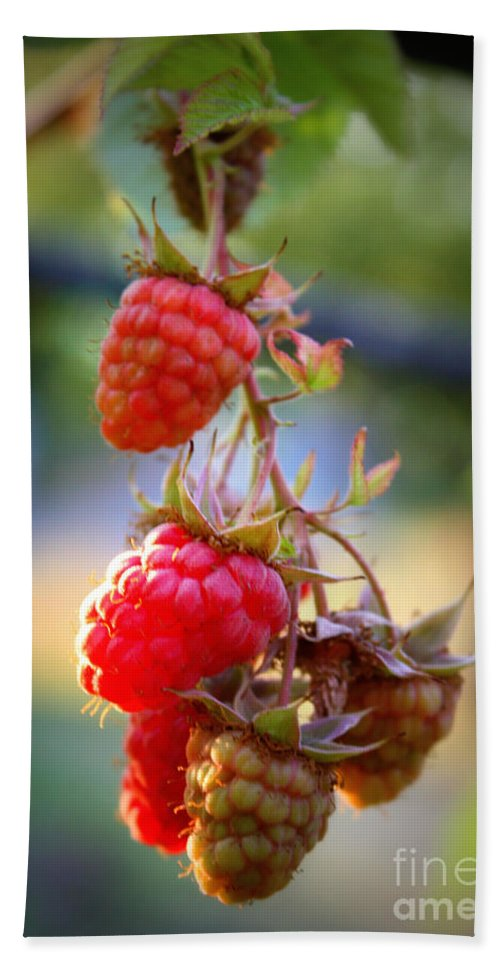 Food And Beverage Hand Towel featuring the photograph Backyard Garden Series - The Freshest Raspberries by Carol Groenen