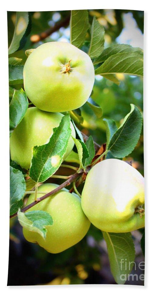 Food Bath Sheet featuring the photograph Backyard Garden Series- Golden Delicious Apples by Carol Groenen