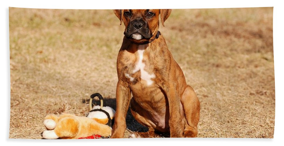 Boxer Puppy Hand Towel featuring the photograph Bailey The Boxer Puppy by Angie Tirado