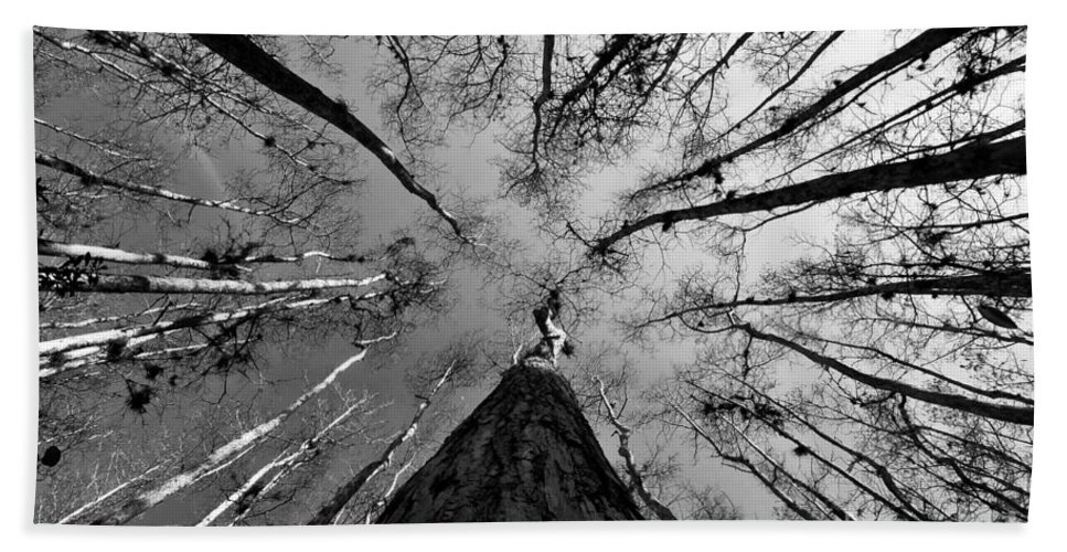Fine Art Photography Hand Towel featuring the photograph Bald Cypress Sky by David Lee Thompson
