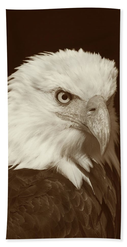 Bald Eagle Hand Towel featuring the photograph Bald Eagle by Gallery Of Modern Art