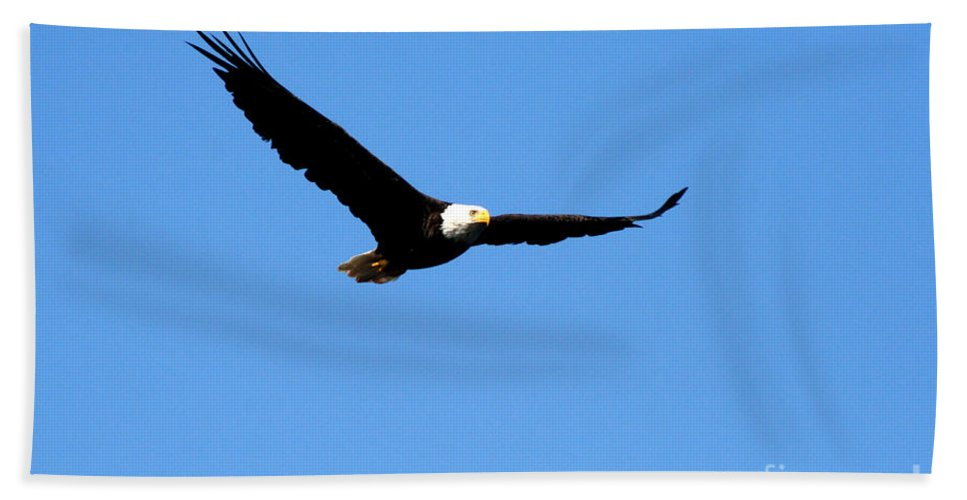 Eagle Bath Towel featuring the photograph Bald Eagle II by Thomas Marchessault