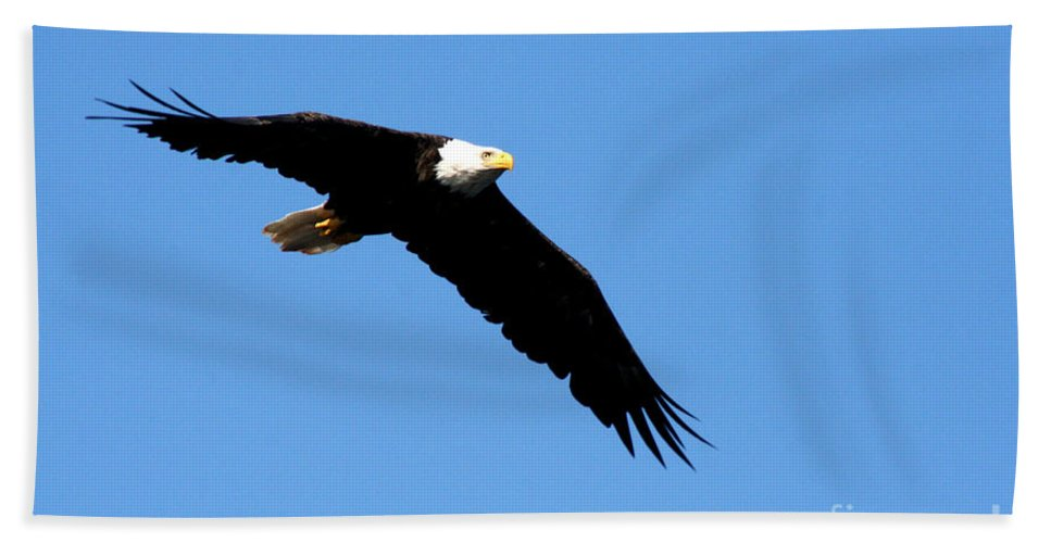Eagle Bath Towel featuring the photograph Bald Eagle IIi by Thomas Marchessault
