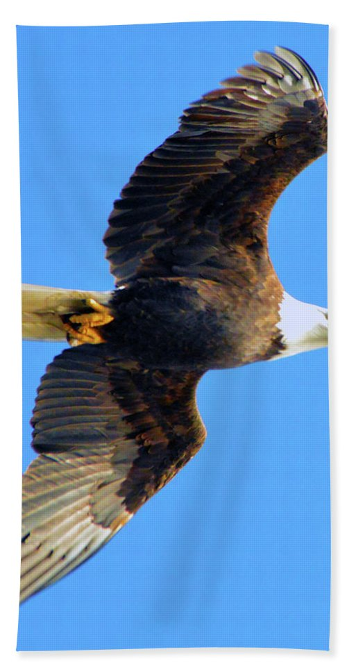 Bath Sheet featuring the photograph Bald Eagle In Flight by Brian O'Kelly