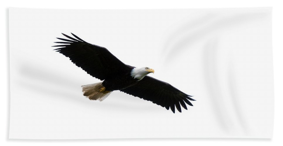 Bald Bath Sheet featuring the photograph Bald Eagle In Flight by Gary Langley