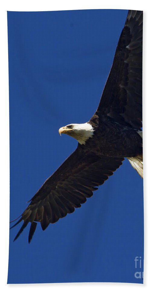 Bird Bath Sheet featuring the photograph Bald Eagle In Flight-signed-#2709 by J L Woody Wooden
