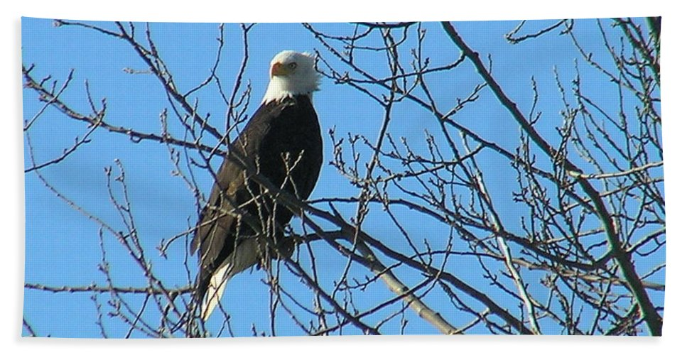 Bald Bath Towel featuring the photograph Bald Eagle by Louise Magno
