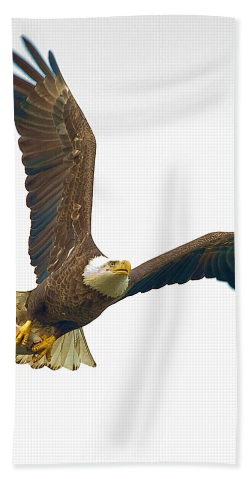 Eagle Bath Sheet featuring the photograph Bald Eagle With Fish by William Jobes