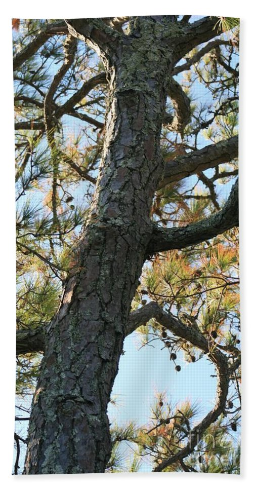 Tree Bath Towel featuring the photograph Bald Head Tree by Nadine Rippelmeyer