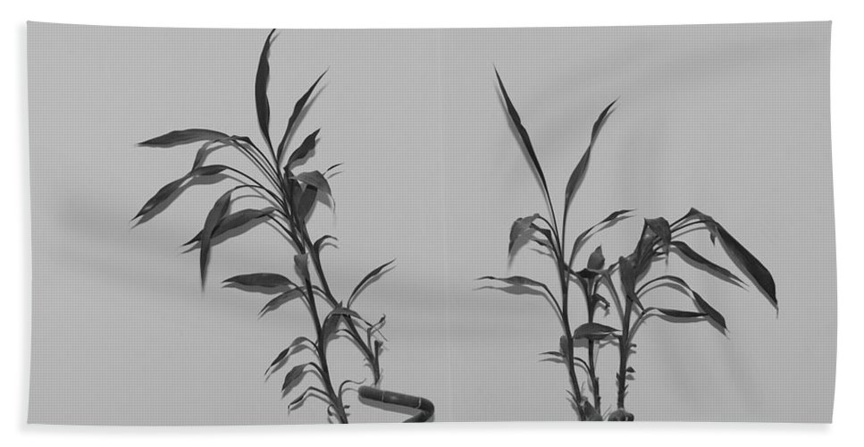 Black And White Hand Towel featuring the photograph Bamboo Shutes by Rob Hans