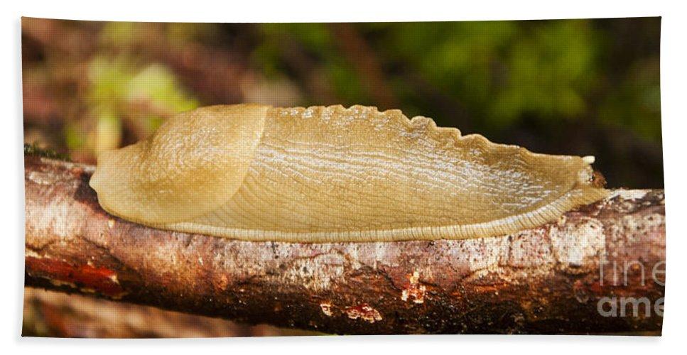 Banana Slug Hand Towel featuring the photograph Banana Slug by Vivian Christopher