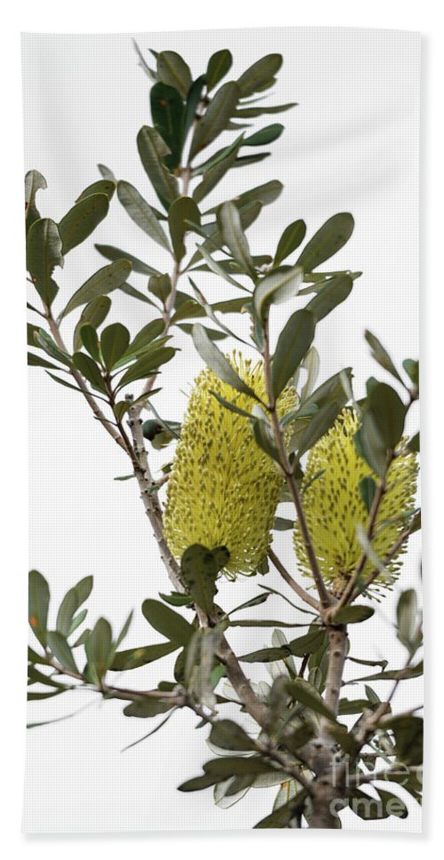 Coastal Banksia Hand Towel featuring the photograph Banksia Syd02 by Werner Padarin