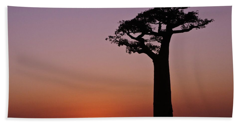 Madagascar Bath Sheet featuring the photograph Baobab At Sunset by Michele Burgess