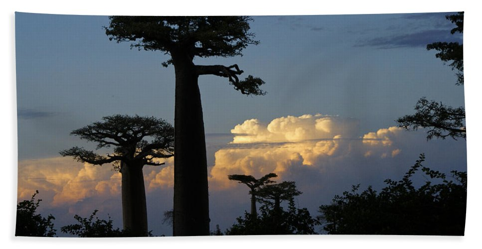 Madagascar Bath Sheet featuring the photograph Baobabs And Storm Clouds by Michele Burgess