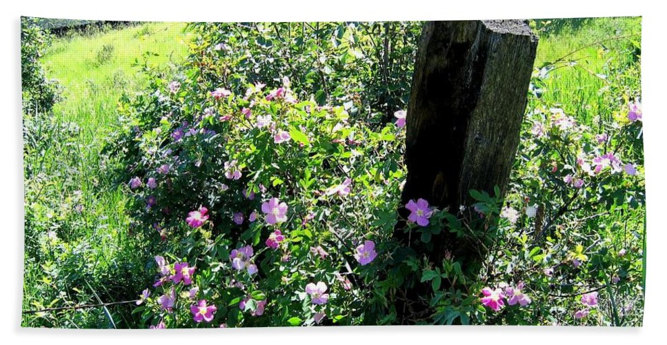 Wild Roses Bath Towel featuring the photograph Barbed Wire And Roses by Will Borden