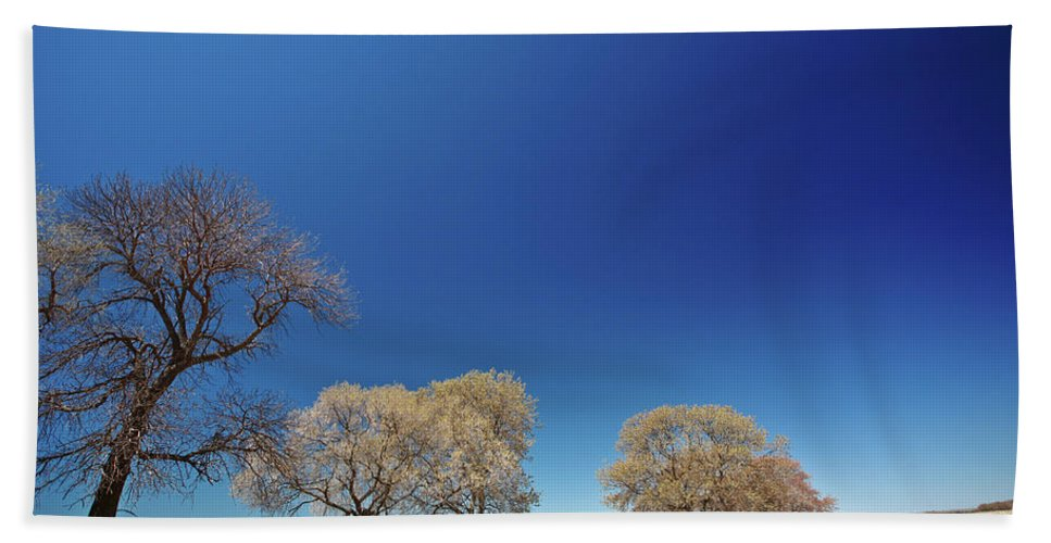Bare Hand Towel featuring the digital art Bare Trees Along Shore Of Lake Manitoba by Mark Duffy