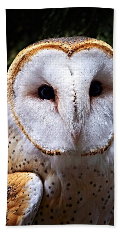 Barn Owl Hand Towel featuring the photograph Barn Owl by Anthony Jones