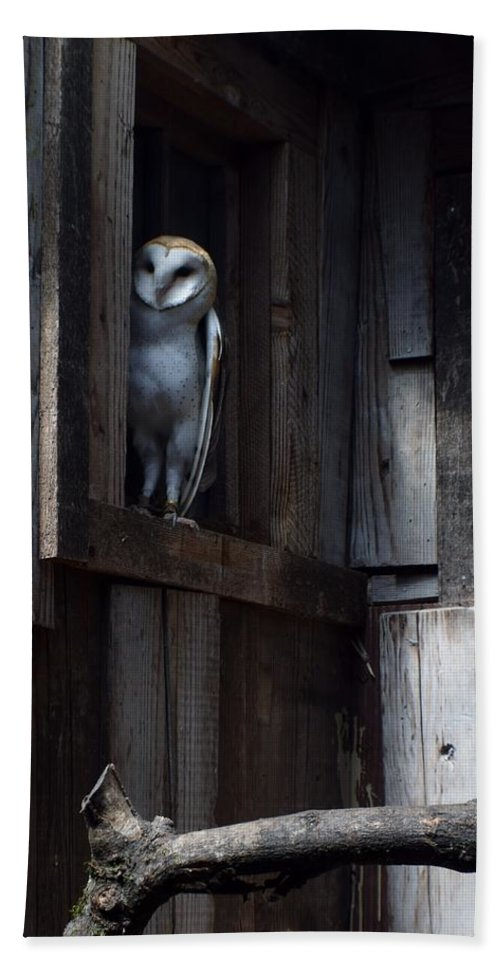 Owls Bath Sheet featuring the photograph Barn Owl......i See You. by Jimmy Chuck Smith
