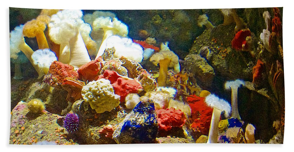 Barnacles And Sea Urchin Among Invertebrates In Monterey Aquarium Hand Towel featuring the photograph Barnacles And Sea Urchin Among Invertebrates In Monterey Aquarium-california by Ruth Hager