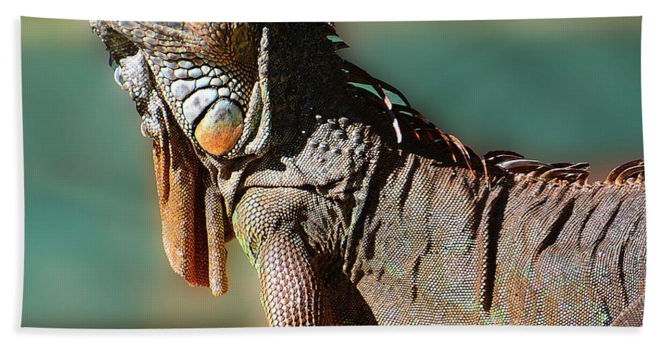 Iguana Bath Sheet featuring the photograph Basking In The Sun by Cindy Manero