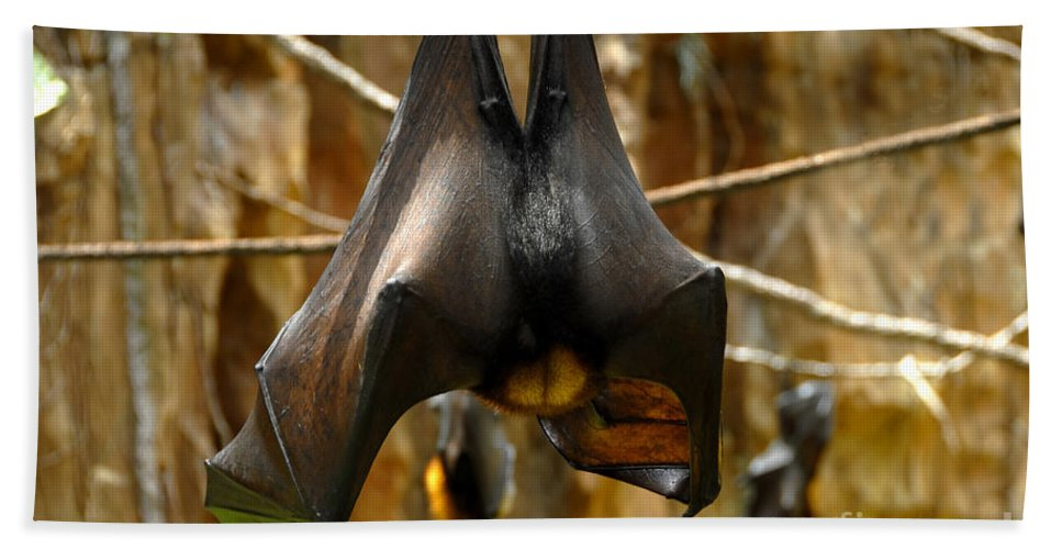 Bats Hand Towel featuring the photograph Bats by David Lee Thompson