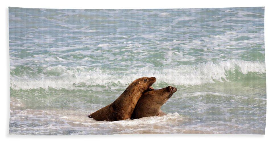 Sea Lion Bath Sheet featuring the photograph Battle For The Beach by Mike Dawson