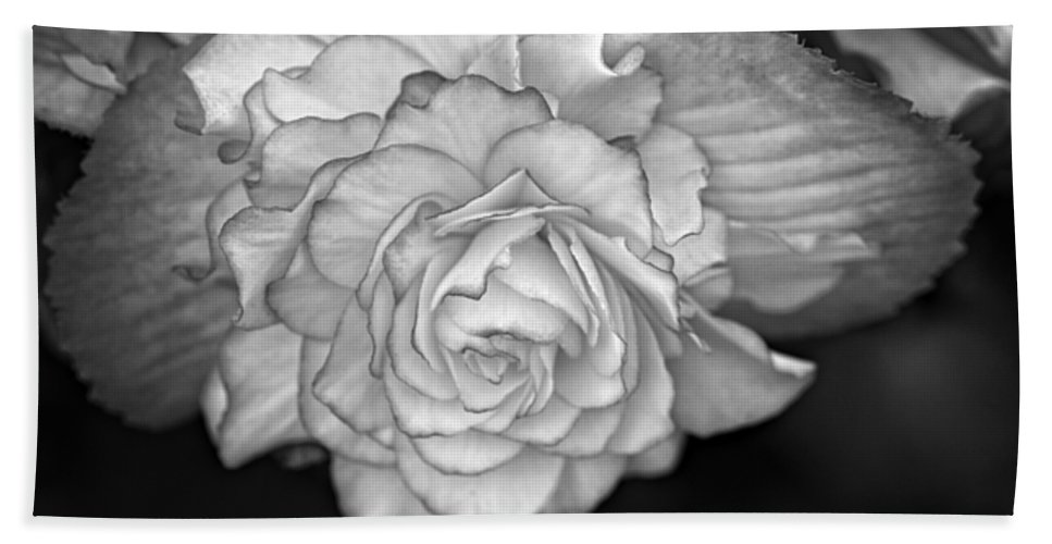 Begonia Hand Towel featuring the photograph Be Gentle Bw by Steve Harrington