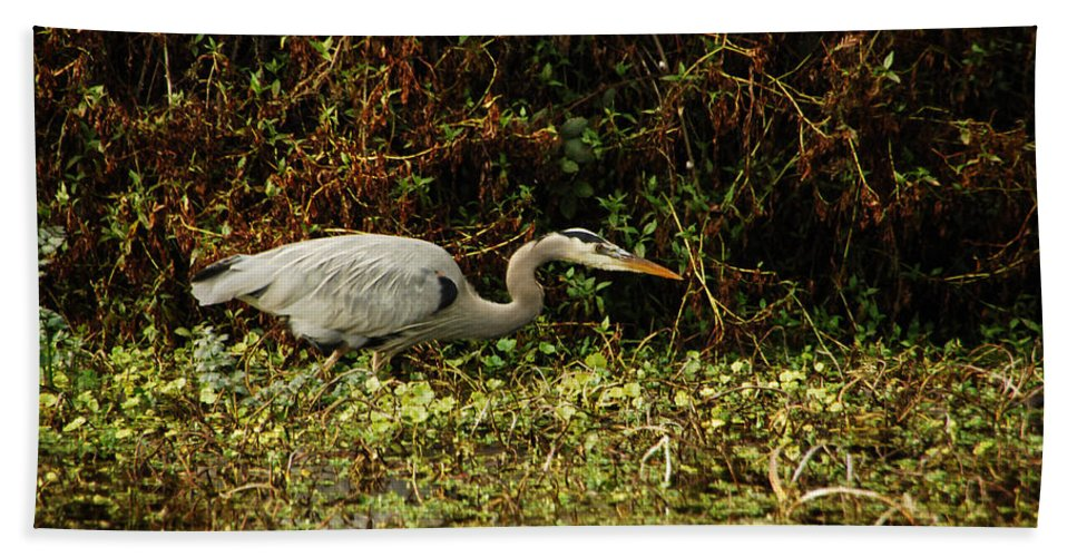 Heron Bath Sheet featuring the photograph Be Wery Wery Quiet by Donna Blackhall