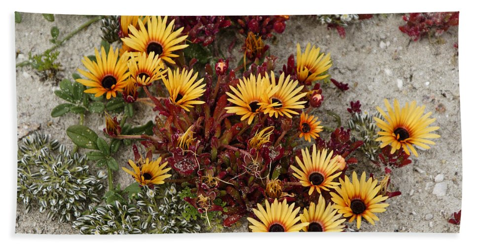 Africa Hand Towel featuring the photograph Beach Potpourri by Michele Burgess
