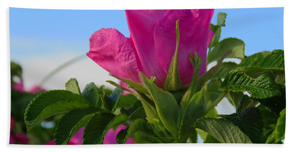 Beach Hand Towel featuring the photograph Beach Rose by Dianne Cowen