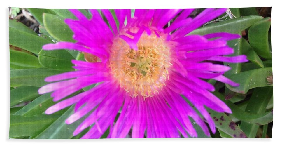 Pink Beach Succulent Hand Towel featuring the photograph Pink Beach Succulent by Karen Moren