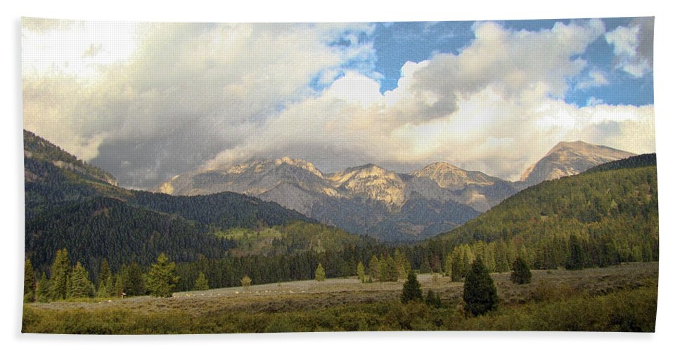 Bear Hand Towel featuring the photograph Bear Country by Terry Anderson