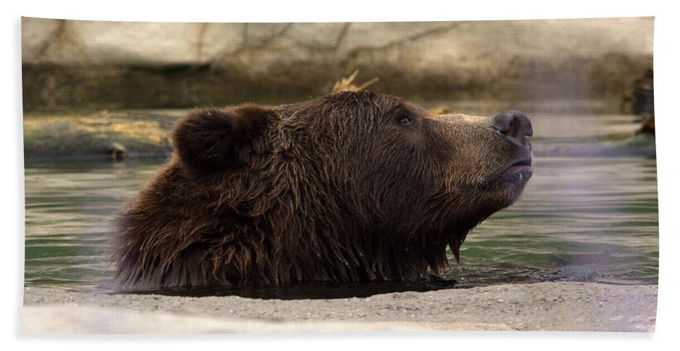 Bear Bath Sheet featuring the photograph Bear Dip by Linda Kerkau