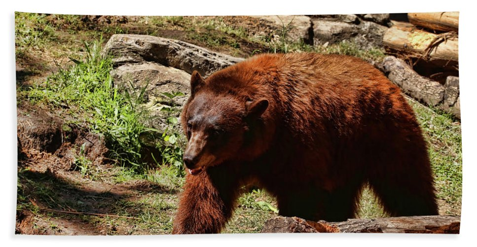 Bear Bath Sheet featuring the photograph Bear Pacing by Judy Vincent