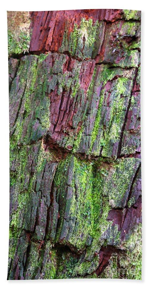 Tree Hand Towel featuring the photograph Beautiful Bark by Carol Groenen