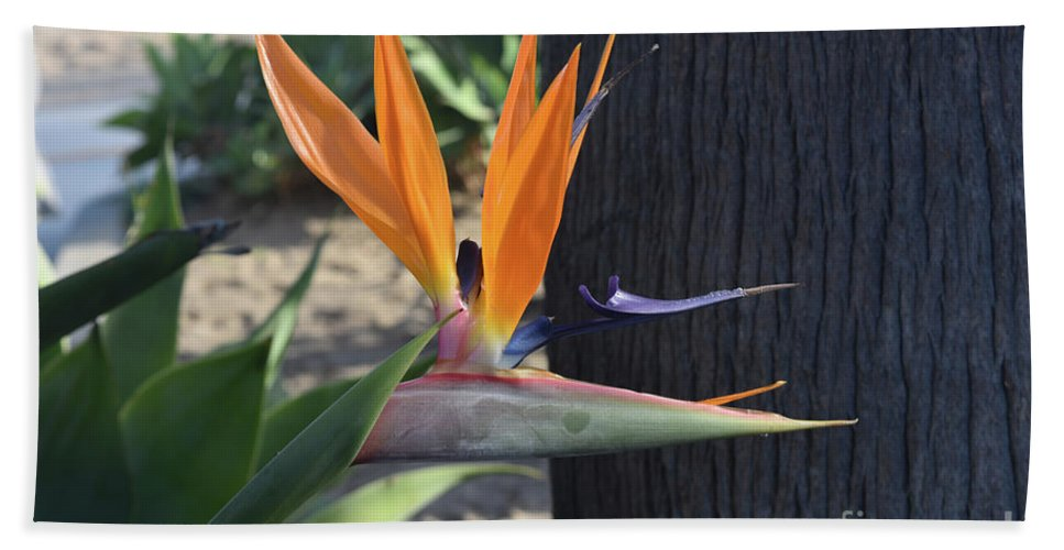 Bird-of-paradise Hand Towel featuring the photograph Beautiful Bird Of Paradise Flower In Full Bloom by DejaVu Designs