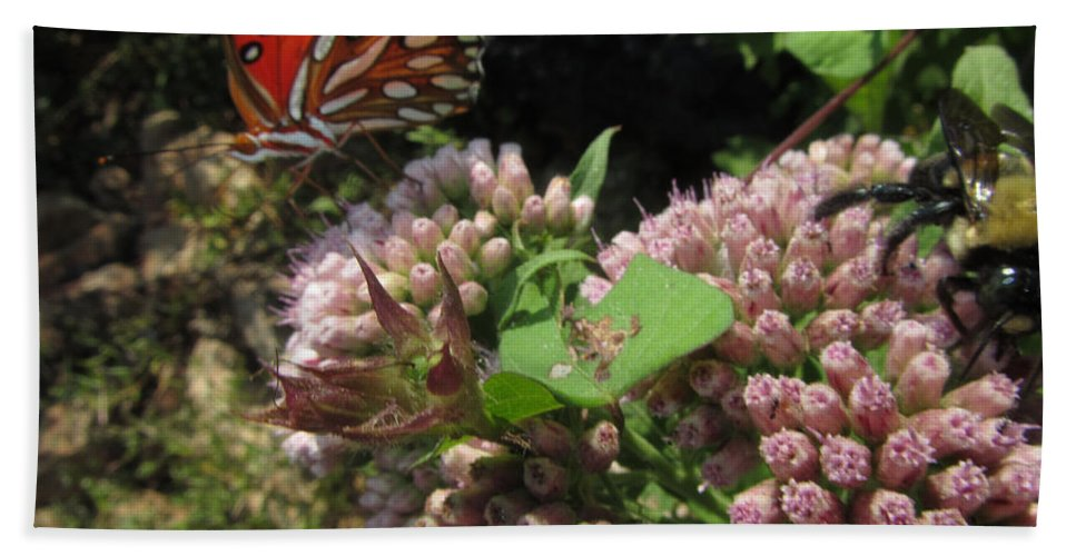 Insects Bath Sheet featuring the photograph Beautiful by Donna Brown