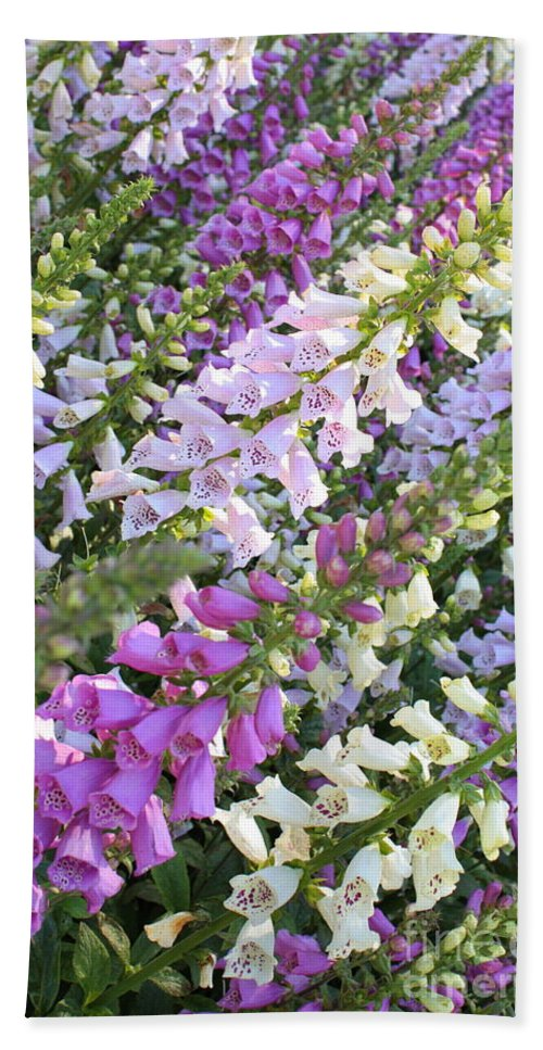 Foxglove Hand Towel featuring the photograph Beautiful Foxglove by Carol Groenen
