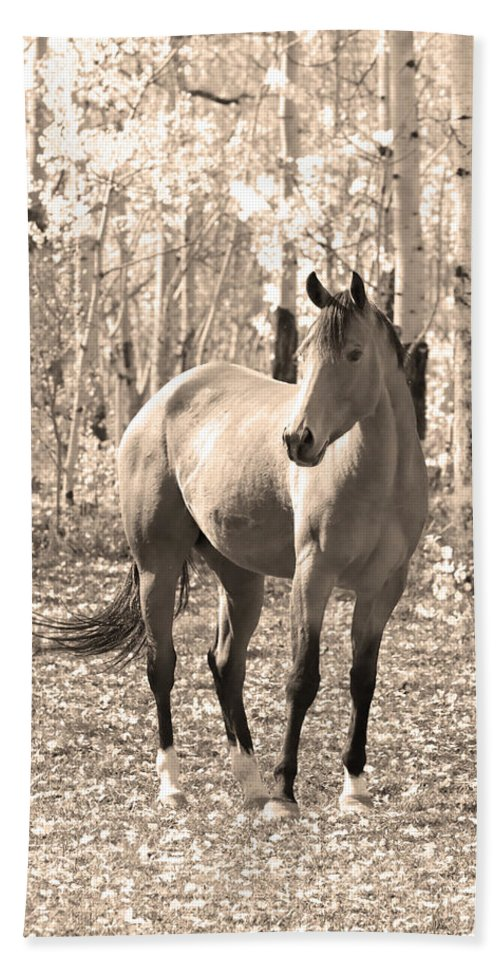 Horse Bath Sheet featuring the photograph Beautiful Horse In Sepia by James BO Insogna