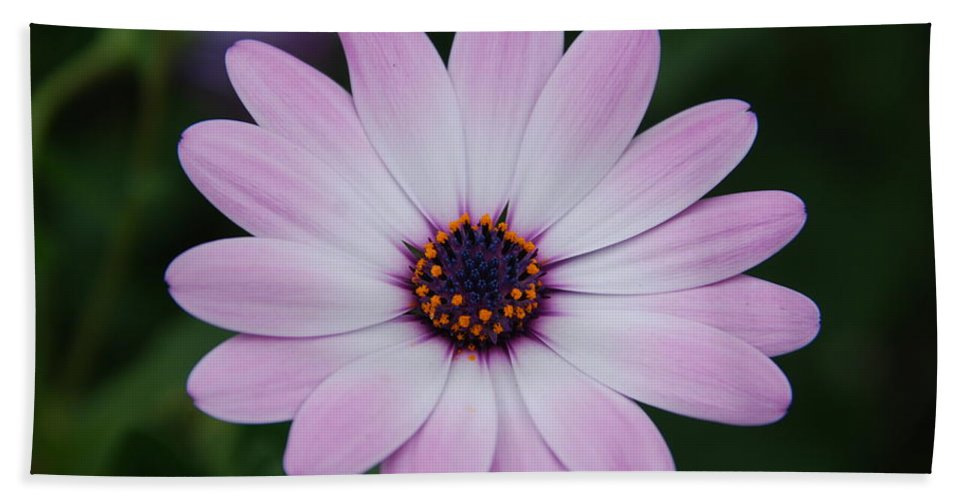 Flower Bath Sheet featuring the photograph Beautiful In Pink Today by Susanne Van Hulst