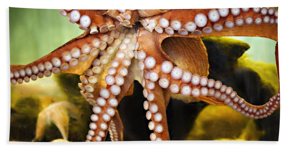 Octopus Bath Sheet featuring the photograph Beautiful Octopus by Marilyn Hunt