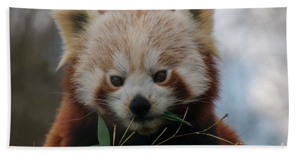 Ailuridae Hand Towel featuring the photograph Beautiful Red Panda by MSVRVisual Rawshutterbug