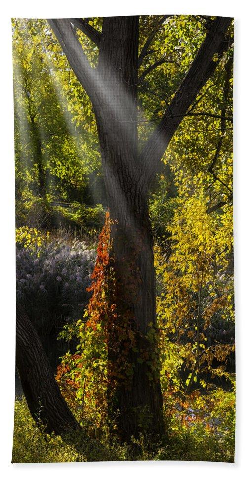 Beautiful Bath Sheet featuring the photograph Beautiful Woodlands by Garry Gay