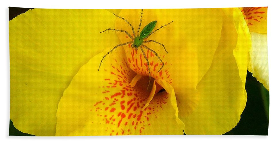 Spider Hand Towel featuring the photograph Beauty And The Beast by Robert Meanor
