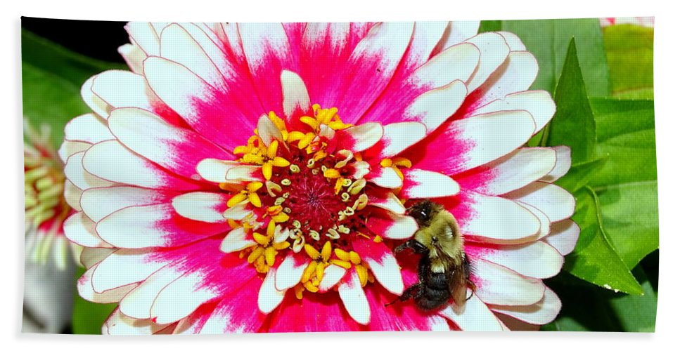 Nature Bath Sheet featuring the photograph Beauty And The Bee #1 by Ed Weidman
