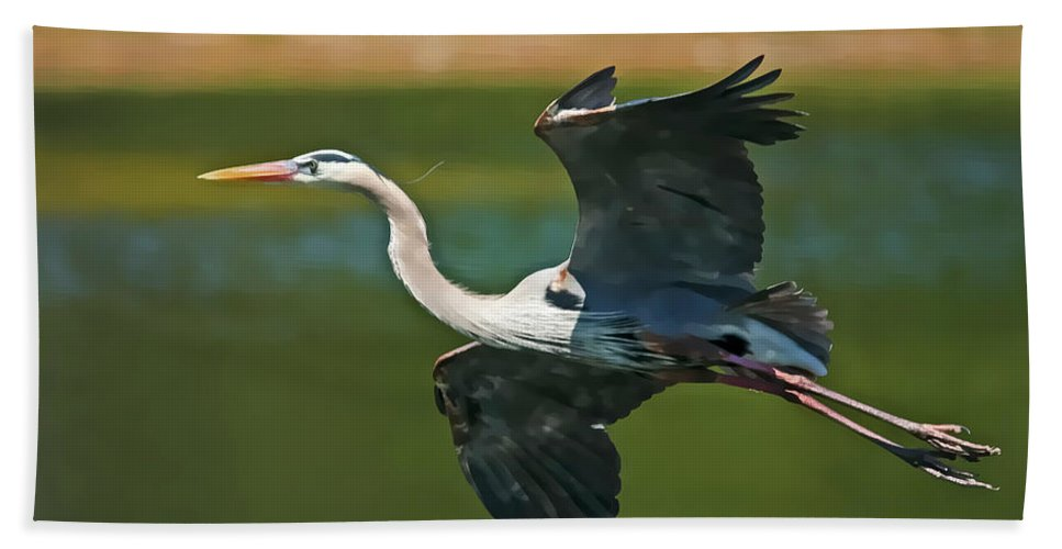 Blue Heron Bath Sheet featuring the photograph Beauty In Flight by Deborah Benoit