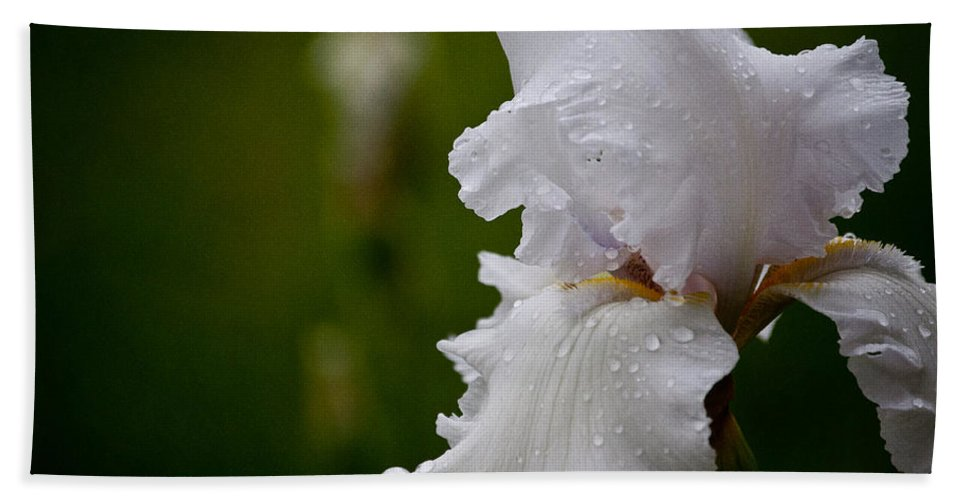 Flower Hand Towel featuring the photograph Beauty Of An Iris by Trish Tritz