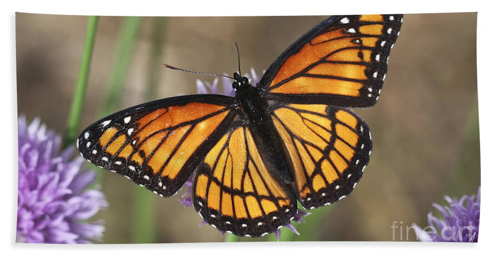 Hand Towel featuring the photograph Beauty With Wings by Deborah Benoit