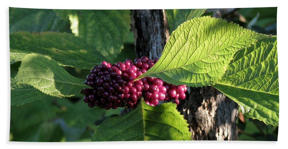 Nature Bath Sheet featuring the photograph Beautyberry 2 by Peg Urban