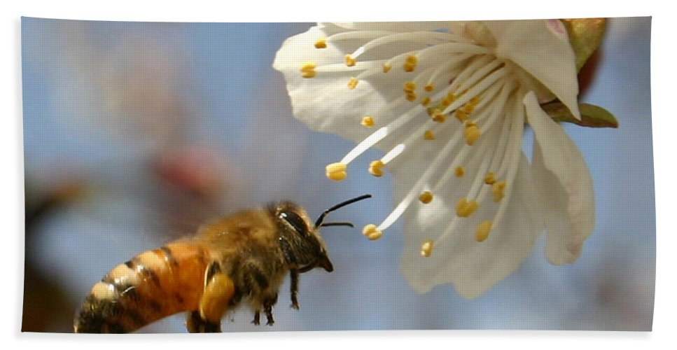 Honey Bath Towel featuring the photograph Bee And A Blossom by Danny Yanai
